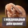 Международный день кролика